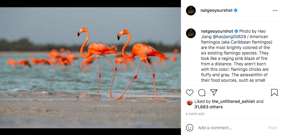 Flamingos running across the sand in front of a body of water