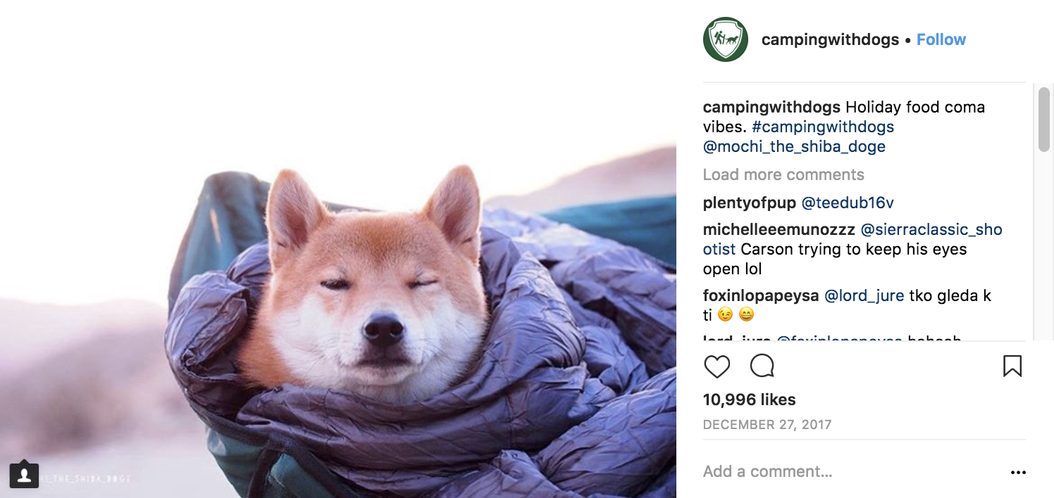 camping-with-dogs-instagram-marketing-strategy